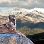 動物占いのコアラとオオカミの相性はどうなの?