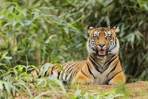 動物占い 相性 トラ ライオン