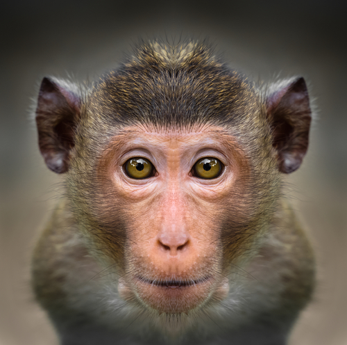 動物占い 相性 黒ヒョウ 猿