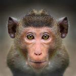 動物占いで分かる『6種類のタイプの猿』