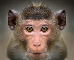 動物占い 猿 女 恋愛