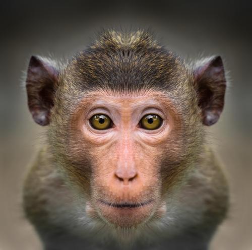 動物占い 相性 コアラ 猿