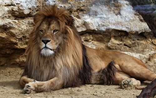 動物占い 相性 ライオン ひつじ