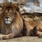動物占い。ライオン「グリーン色」人の性格は?