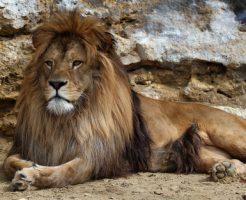 動物占い ライオン グリーン