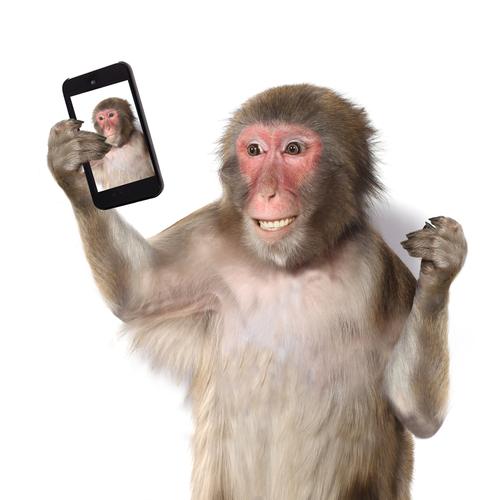 動物占い 猿 ブラウン