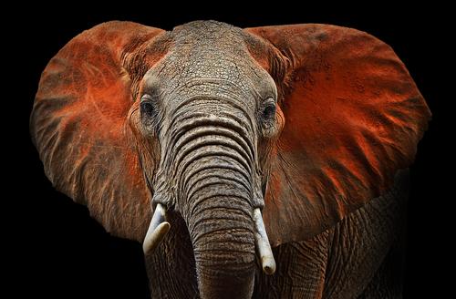 動物占い 相性 トラ ゾウ