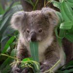 コアラと診断された人オレンジのタイプの動物占いについて