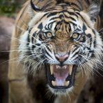 動物占いで相性診断!トラとゾウの恋愛相性は?