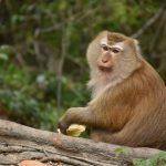 動物占い。猿とこじかの相性はどうなの?