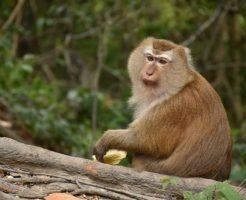 動物占い 猿 こじか 相性