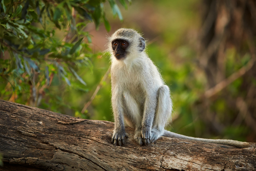 動物占い 相性 猿 たぬき