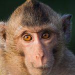 動物占いで猿の女性の性格とは?