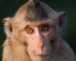 動物占い 猿 性格 女