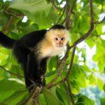 動物占い。猿と猿の相性は??合うの!?