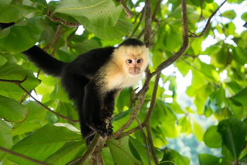 動物占い 相性 猿 猿