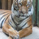 動物占いで虎と診断された人は仕事人?