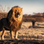 動物占いのライオンとペガサスの相性