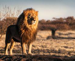 動物占い 相性 ライオン ペガサス