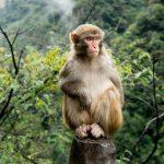 動物占い。猿のオレンジ色の人は気分屋?!