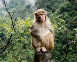 動物占い 猿 オレンジ