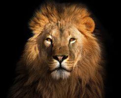 動物占い ライオン 甘えん坊