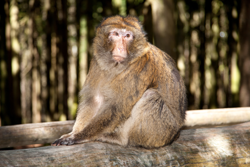 動物占い 相性 こじか 猿