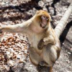 動物占い。猿の人(ブルー色)について診断