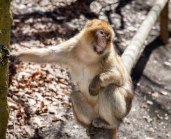 動物占い 猿 ブルー