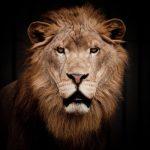 動物占いでライオンとこじかの結婚運の相性は?