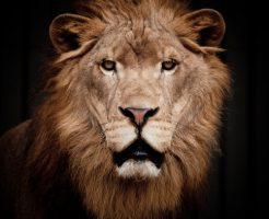 動物占い 相性 ライオン こじか