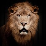 動物占い「ライオン」の人について色別?